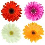 Set of gerbera flowers Royalty Free Stock Images