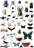 Set getrennte Insekte mit Schatten lizenzfreie abbildung