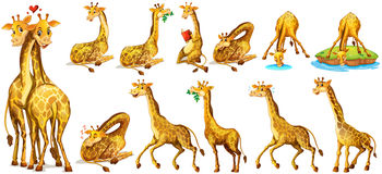 Set of giraffe in different actions Royalty Free Stock Photography