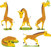 Set giraffe Royalty Free Stock Images
