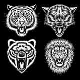 Set Gniewne Zwierzęce głowy Obraz Royalty Free