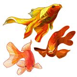 Set of Gold Fish. Set of Abstract Gold  Aquarium Fish. Vector illustration Stock Photography