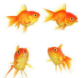 Set of Gold fish Isolation on the white Royalty Free Stock Photo