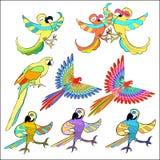 Set of golden Caribbean parrot dancing. vector illustration. Set of golden Caribbean parrot dancing vector illustration Stock Images
