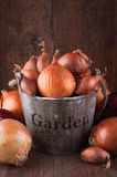 Set of golden, red onions and shallots Royalty Free Stock Images