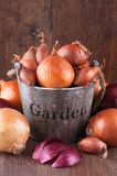 Set of golden, red onions and shallots Stock Photo