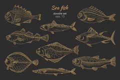 Set of golden sea fish. Doodle vector. Set of golden sea fish. Doodle art line. Realistic illustration isolated on black background. Sketch, hatch. Vector nature Royalty Free Stock Images