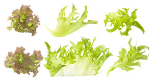 Set Grün und farbige Blätter des Kopfsalates Lizenzfreies Stockbild