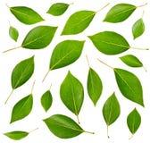 Set grüne Blätter Stockbild