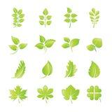 Set grüne Blattikonen Stockbilder
