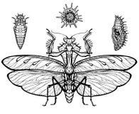 Set graficzni wizerunki przyroda: modliszka, larwa, radiolaria ilustracja wektor