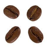 Set of grain of coffee Royalty Free Stock Photography