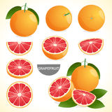 Set of grapefruit with leaf in various styles vector format Stock Photo