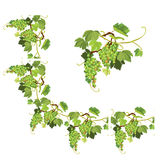 Set of Grapes frame, vignette and repeated element  Stock Photos