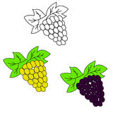 Set of grapes. Grape hand drawn sketch. Illustration of grapes bunch on branch with leaves. Part of set of fruits sketchy drawings Stock Photos