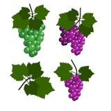 Set of Grapes isolated in white background. Flat Design Illustration Stock Images