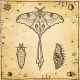 Set of graphic images: butterfly, larva, doll. Vector illustration. A background - imitation of old paper Royalty Free Stock Photo