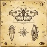 Set of graphic images: butterfly, larva, radiolaria. Vector illustration. A background - imitation of old paper Stock Photos