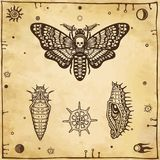 Set of graphic images: moth Dead Head, larva, doll, radiolaria. Vector illustration. A background - imitation of old paper Royalty Free Stock Photos