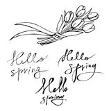 A set of graphic inscriptions `hello, spring` with a bouquet of tulips. Royalty Free Stock Image
