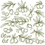 Set of graphic olive branches Royalty Free Stock Photo
