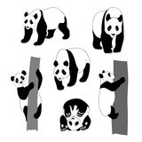 Set of graphic panda. Panda icons and graphic illustrations. Set of images in different poses Royalty Free Stock Photography