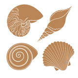 Set of graphic sea shells. EPS10 Royalty Free Stock Photo