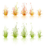 Set of grass Royalty Free Stock Photo