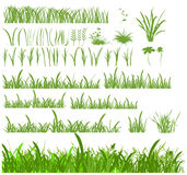 Set of grass Royalty Free Stock Photography