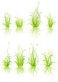 Set of grass Royalty Free Stock Photos
