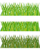 Set of grass Stock Photo