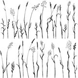 Set of grass silhouettes Royalty Free Stock Photos