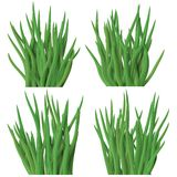 Set of grass tussock isolated on white background Royalty Free Stock Image