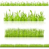 Set grass. Vector image. Stock Photo