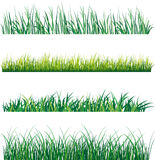 Grass. Set of grass on white background. Vector illustration Royalty Free Stock Images