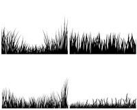 Set of grasses. Set of different meadow vector grass silhouettes Royalty Free Stock Photography