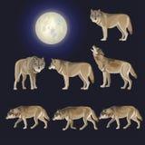 Set of gray wolves stock illustration