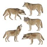 Set of gray wolves royalty free illustration