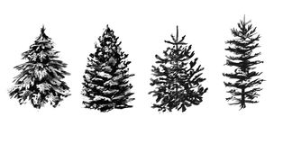 Set of grayscale winter trees. Stock Image