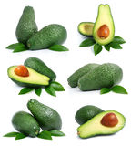 Set of green avocado fruits with leaf Stock Image