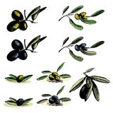 Set of green and black olives illustrations Royalty Free Stock Photography