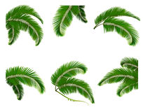 Set green branches with leaves of palm trees Stock Photo
