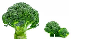 Set of green broccoli Brassica oleracea. Vegetables natural so. Urce of betacarotene, vitamin c, vitamin k, fiber food, folate. Fresh broccoli cabbage  on white Stock Images
