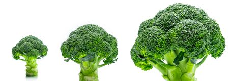Set of green broccoli Brassica oleracea. Vegetables natural. Source of betacarotene, vitamin c, vitamin k, fiber food, folate. Fresh broccoli cabbage isolated Royalty Free Stock Images