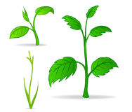 Set of green cartoon plants Royalty Free Stock Photos