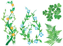 Set of green decorative plants with flowers - eps Stock Images