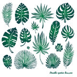 Set of green doodle exotic palm leaves and plants on a white background. Vector botanical illustration, design elements. Stock Photos