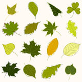 Set of green doodle leaves. Collection of hand-drawn green leaves of various trees Royalty Free Stock Image