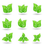 Set of green eco leaves  Stock Images