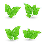 Set of green eco leaves isolated on white backgrou Royalty Free Stock Images